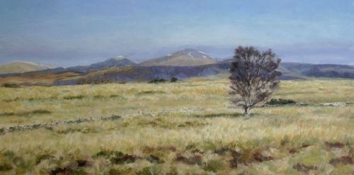 Ben Ledi with lone birch 2