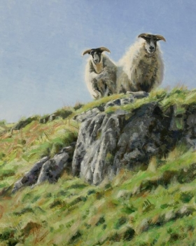 'Overlooked. Scottish Black faced sheep on The Campsies'