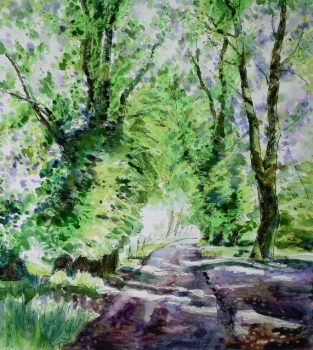 'Sun through the Limes, Culcreuch castle Drive'