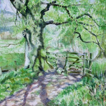 'Tree & gate, lade path, Fintry. Spring'